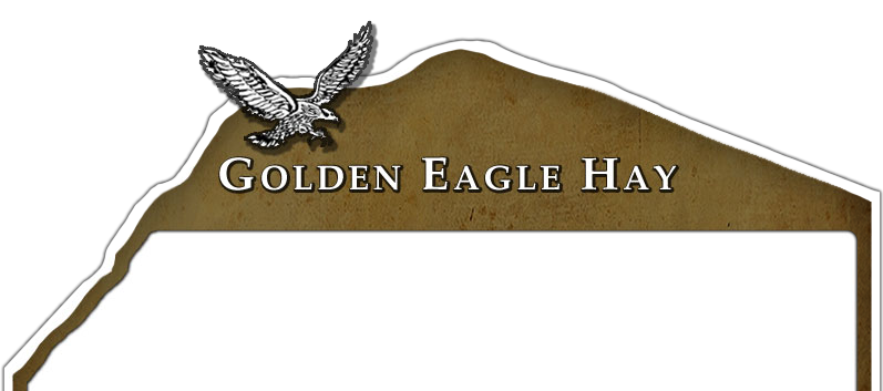 Golden Eagle Hay